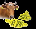 Ушные бирки для животных КРС и МРС в Красноярске